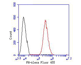 Flow cytometric analysis of FH was done on HCT116 cells. The cells were fixed, permeabilized and stained with the primary antibody (ER1902-01, 1/50) (red). After incubation of the primary antibody at room temperature for an hour, the cells were stained with a Alexa Fluor 488-conjugated Goat anti-Rabbit IgG Secondary antibody at 1/1000 dilution for 30 minutes.Unlabelled sample was used as a control (cells without incubation with primary antibody; black).