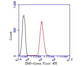 Flow cytometric analysis of CD45 was done on Jurkat cells. The cells were fixed, permeabilized and stained with the primary antibody (ER1902-02, 1/50) (red). After incubation of the primary antibody at room temperature for an hour, the cells were stained with a Alexa Fluor 488-conjugated Goat anti-Rabbit IgG Secondary antibody at 1/1000 dilution for 30 minutes.Unlabelled sample was used as a control (cells without incubation with primary antibody; black).