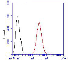 Flow cytometric analysis of KCNMA1 was done on HCT116 cells. The cells were fixed, permeabilized and stained with the primary antibody (ER1902-04, 1/100) (red). After incubation of the primary antibody at room temperature for an hour, the cells were stained with a Alexa Fluor 488-conjugated goat anti-rabbit IgG Secondary antibody at 1/500 dilution for 30 minutes.Unlabelled sample was used as a control (cells without incubation with primary antibody; blcak).