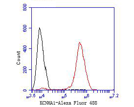 Flow cytometric analysis of KCNMA1 was done on HCT116 cells. The cells were fixed, permeabilized and stained with the primary antibody (ER1902-05, 1/50) (red). After incubation of the primary antibody at room temperature for an hour, the cells were stained with a Alexa Fluor 488-conjugated Goat anti-Rabbit IgG Secondary antibody at 1/1000 dilution for 30 minutes.Unlabelled sample was used as a control (cells without incubation with primary antibody; black).