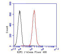 Flow cytometric analysis of KCNK2 was done on A549 cells. The cells were fixed, permeabilized and stained with the primary antibody (ER1902-06, 1/100) (red). After incubation of the primary antibody at room temperature for an hour, the cells were stained with a Alexa Fluor 488-conjugated goat anti-rabbit IgG Secondary antibody at 1/500 dilution for 30 minutes.Unlabelled sample was used as a control (cells without incubation with primary antibody; blcak).