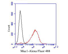 Flow cytometric analysis of Muc1 was done on MCF-7 cells. The cells were fixed, permeabilized and stained with the primary antibody (ER1902-10, 1/50) (red). After incubation of the primary antibody at room temperature for an hour, the cells were stained with a Alexa Fluor 488-conjugated Goat anti-Rabbit IgG Secondary antibody at 1/1000 dilution for 30 minutes.Unlabelled sample was used as a control (cells without incubation with primary antibody; black).