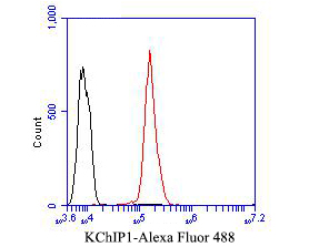 Flow cytometric analysis of KChIP1 was done on SH-SY5Y cells. The cells were fixed, permeabilized and stained with the primary antibody (ER1902-17, 1/50) (red). After incubation of the primary antibody at room temperature for an hour, the cells were stained with a Alexa Fluor 488-conjugated Goat anti-Rabbit IgG Secondary antibody at 1/1000 dilution for 30 minutes.Unlabelled sample was used as a control (cells without incubation with primary antibody; black).