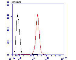 Flow cytometric analysis of DLL4 was done on 293T cells. The cells were fixed, permeabilized and stained with the primary antibody (ER1902-20, 1/100) (red). After incubation of the primary antibody at room temperature for an hour, the cells were stained with a Alexa Fluor 488-conjugated goat anti-rabbit IgG Secondary antibody at 1/500 dilution for 30 minutes.Unlabelled sample was used as a control (cells without incubation with primary antibody; blcak).