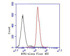 Flow cytometric analysis of ETN1 was done on JAR cells. The cells were fixed, permeabilized and stained with the primary antibody (ER1902-23, 1/50) (red). After incubation of the primary antibody at room temperature for an hour, the cells were stained with a Alexa Fluor 488-conjugated Goat anti-Rabbit IgG Secondary antibody at 1/1000 dilution for 30 minutes.Unlabelled sample was used as a control (cells without incubation with primary antibody; black).