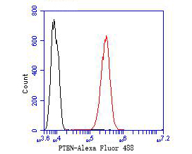 Flow cytometric analysis of PTEN was done on SH-SY5Y cells. The cells were fixed, permeabilized and stained with the primary antibody (ER1902-27, 1/50) (red). After incubation of the primary antibody at room temperature for an hour, the cells were stained with a Alexa Fluor 488-conjugated Goat anti-Rabbit IgG Secondary antibody at 1/1000 dilution for 30 minutes.Unlabelled sample was used as a control (cells without incubation with primary antibody; black).