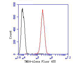 Flow cytometric analysis of TMX4 was done on SH-SY5Y cells. The cells were fixed, permeabilized and stained with the primary antibody (ER1902-31, 1/50) (red). After incubation of the primary antibody at room temperature for an hour, the cells were stained with a Alexa Fluor 488-conjugated Goat anti-Rabbit IgG Secondary antibody at 1/1000 dilution for 30 minutes.Unlabelled sample was used as a control (cells without incubation with primary antibody; black).