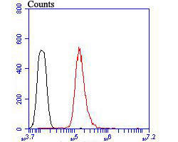 Flow cytometric analysis of SDF1 alpha was done on HepG2 cells. The cells were fixed, permeabilized and stained with the primary antibody (ER1902-35, 1/100) (red). After incubation of the primary antibody at room temperature for an hour, the cells were stained with a Alexa Fluor 488-conjugated goat anti-rabbit IgG Secondary antibody at 1/500 dilution for 30 minutes.Unlabelled sample was used as a control (cells without incubation with primary antibody; black).