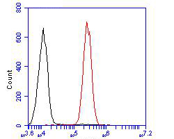 Flow cytometric analysis of IL18 binding protein was done on A549 cells. The cells were fixed, permeabilized and stained with the primary antibody (ER1902-36, 1/100) (red). After incubation of the primary antibody at room temperature for an hour, the cells were stained with a Alexa Fluor 488-conjugated goat anti-rabbit IgG Secondary antibody at 1/500 dilution for 30 minutes.Unlabelled sample was used as a control (cells without incubation with primary antibody; blcak).