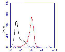 Flow cytometric analysis of KCNN2 was done on F9 cells. The cells were fixed, permeabilized and stained with the primary antibody (ER1902-41, 1/100) (red). After incubation of the primary antibody at room temperature for an hour, the cells were stained with a Alexa Fluor 488-conjugated goat anti-rabbit IgG Secondary antibody at 1/500 dilution for 30 minutes.Unlabelled sample was used as a control (cells without incubation with primary antibody; blcak).