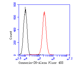 Flow cytometric analysis of Connexin-26 was done on A431 cells. The cells were fixed, permeabilized and stained with the primary antibody (ER1902-42, 1/50) (red). After incubation of the primary antibody at room temperature for an hour, the cells were stained with a Alexa Fluor 488-conjugated Goat anti-Rabbit IgG Secondary antibody at 1/1000 dilution for 30 minutes.Unlabelled sample was used as a control (cells without incubation with primary antibody; black).