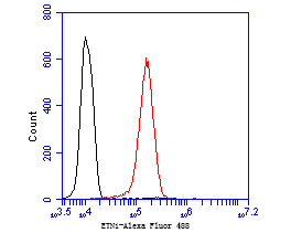 Flow cytometric analysis of ETN1 was done on EA.hy926 cells. The cells were fixed, permeabilized and stained with the primary antibody (ER1902-43, 1/50) (red). After incubation of the primary antibody at room temperature for an hour, the cells were stained with a Alexa Fluor 488-conjugated goat anti-rabbit IgG Secondary antibody at 1/1000 dilution for 30 minutes.Unlabelled sample was used as a control (cells without incubation with primary antibody; black).