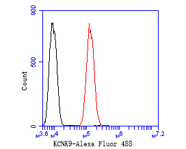 Flow cytometric analysis of KCNK9 was done on SH-SY5Y cells. The cells were fixed, permeabilized and stained with the primary antibody (ER1902-47, 1/50) (red). After incubation of the primary antibody at room temperature for an hour, the cells were stained with a Alexa Fluor 488-conjugated Goat anti-Rabbit IgG Secondary antibody at 1/1000 dilution for 30 minutes.Unlabelled sample was used as a control (cells without incubation with primary antibody; black).