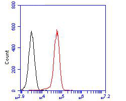 Flow cytometric analysis of CLIC4 was done on 293T cells. The cells were fixed, permeabilized and stained with the primary antibody (ER1902-48, 1/100) (red). After incubation of the primary antibody at room temperature for an hour, the cells were stained with a Alexa Fluor 488-conjugated goat anti-rabbit IgG Secondary antibody at 1/500 dilution for 30 minutes.Unlabelled sample was used as a control (cells without incubation with primary antibody; blcak).