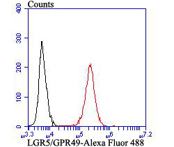 Flow cytometric analysis of LGR5/GPR49 was done on HCT116 cells. The cells were fixed, permeabilized and stained with LGR5/GPR49 antibody at 1/100 dilution (red) compared with an unlabelled control (cells without incubation with primary antibody; black). After incubation of the primary antibody on room temperature for an hour, the cells was stained with a Alexa Fluor™ 488-conjugated goat anti-rabbit IgG Secondary antibody at 1/500 dilution for 30 minutes.