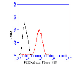 Flow cytometric analysis of P2X2 was done on MCF-7 cells. The cells were fixed, permeabilized and stained with the primary antibody (ER1902-59, 1/50) (red). After incubation of the primary antibody at room temperature for an hour, the cells were stained with a Alexa Fluor 488-conjugated Goat anti-Rabbit IgG Secondary antibody at 1/1000 dilution for 30 minutes.Unlabelled sample was used as a control (cells without incubation with primary antibody; black).