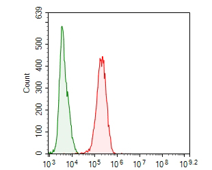 Flow cytometric analysis of MCM7 was done on MCF-7 cells. The cells were fixed, permeabilized and stained with the primary antibody (ER1902-60, 1/100) (red). After incubation of the primary antibody at room temperature for an hour, the cells were stained with a Alexa Fluor 488-conjugated goat anti-rabbit IgG Secondary antibody at 1/500 dilution for 30 minutes.Unlabelled sample was used as a control (cells without incubation with primary antibody; green).