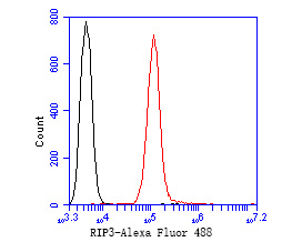 Flow cytometric analysis of RIP3 was done on SW620 cells. The cells were fixed, permeabilized and stained with the primary antibody (ER1902-67, 1/50) (red). After incubation of the primary antibody at room temperature for an hour, the cells were stained with a Alexa Fluor 488-conjugated Goat anti-Rabbit IgG Secondary antibody at 1/1000 dilution for 30 minutes.Unlabelled sample was used as a control (cells without incubation with primary antibody; black).