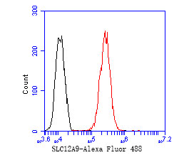 Flow cytometric analysis of SLC12A9 was done on MCF-7 cells. The cells were fixed, permeabilized and stained with the primary antibody (ER1902-78, 1/50) (red). After incubation of the primary antibody at room temperature for an hour, the cells were stained with a Alexa Fluor 488-conjugated Goat anti-Rabbit IgG Secondary antibody at 1/1000 dilution for 30 minutes.Unlabelled sample was used as a control (cells without incubation with primary antibody; black).