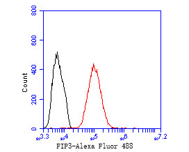 Flow cytometric analysis of Rab11-FIP3 was done on MCF-7 cells. The cells were fixed, permeabilized and stained with the primary antibody (ER1902-80, 1/50) (red). After incubation of the primary antibody at room temperature for an hour, the cells were stained with a Alexa Fluor 488-conjugated Goat anti-Rabbit IgG Secondary antibody at 1/1000 dilution for 30 minutes.Unlabelled sample was used as a control (cells without incubation with primary antibody; black).