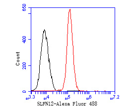 Flow cytometric analysis of SLFN12 was done on 293 cells. The cells were fixed, permeabilized and stained with the primary antibody (ER1902-84, 1/50) (red). After incubation of the primary antibody at room temperature for an hour, the cells were stained with a Alexa Fluor 488-conjugated Goat anti-Rabbit IgG Secondary antibody at 1/1000 dilution for 30 minutes.Unlabelled sample was used as a control (cells without incubation with primary antibody; black).
