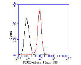 Flow cytometric analysis of P2X3 was done on 293 cells. The cells were fixed, permeabilized and stained with the primary antibody (ER1902-88, 1/50) (red). After incubation of the primary antibody at room temperature for an hour, the cells were stained with a Alexa Fluor 488-conjugated Goat anti-Rabbit IgG Secondary antibody at 1/1000 dilution for 30 minutes.Unlabelled sample was used as a control (cells without incubation with primary antibody; black).