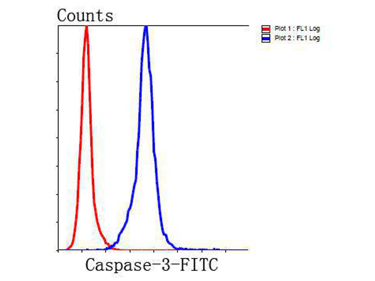 Flow cytometric analysis of Hela cells with Caspase-3 antibody at 1/100 dilution (blue) compared with an unlabelled control (cells without incubation with primary antibody; red). Goat anti rabbit IgG (FITC) was used as the secondary antibody.