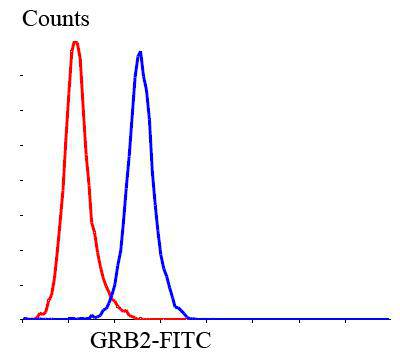 Flow cytometric analysis of SHG-44 cells with GRB2 antibody at 1/100 dilution (blue) compared with an unlabelled control (cells without incubation with primary antibody; red). Goat anti rabbit IgG (FITC) was used as the secondary antibody.