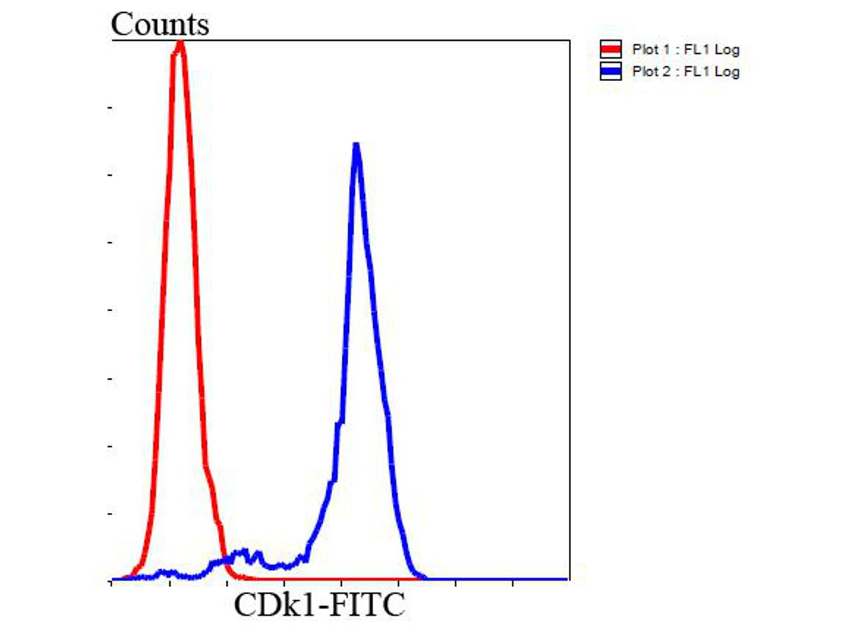 Flow cytometric analysis of Hela cells with CDk1 antibody at 1/100 dilution (blue) compared with an unlabelled control (cells without incubation with primary antibody; red). Goat anti rabbit IgG (FITC) was used as the secondary antibody.