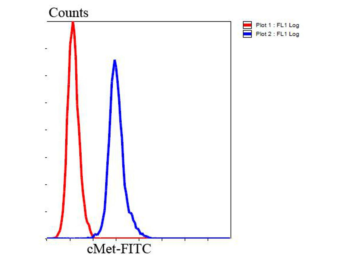 Flow cytometric analysis of Hela cells with cMet antibody at 1/100 dilution (blue) compared with an unlabelled control (cells without incubation with primary antibody; red). Goat anti rabbit IgG (FITC) was used as the secondary antibody.