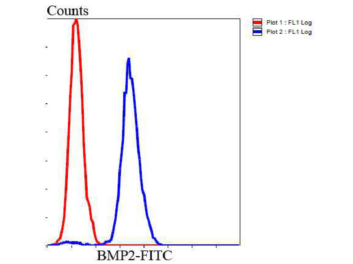 Flow cytometric analysis of Hela cells with BMP2 antibody at 1/100 dilution (blue) compared with an unlabelled control (cells without incubation with primary antibody; red). Goat anti rabbit IgG (FITC) was used as the secondary antibody.