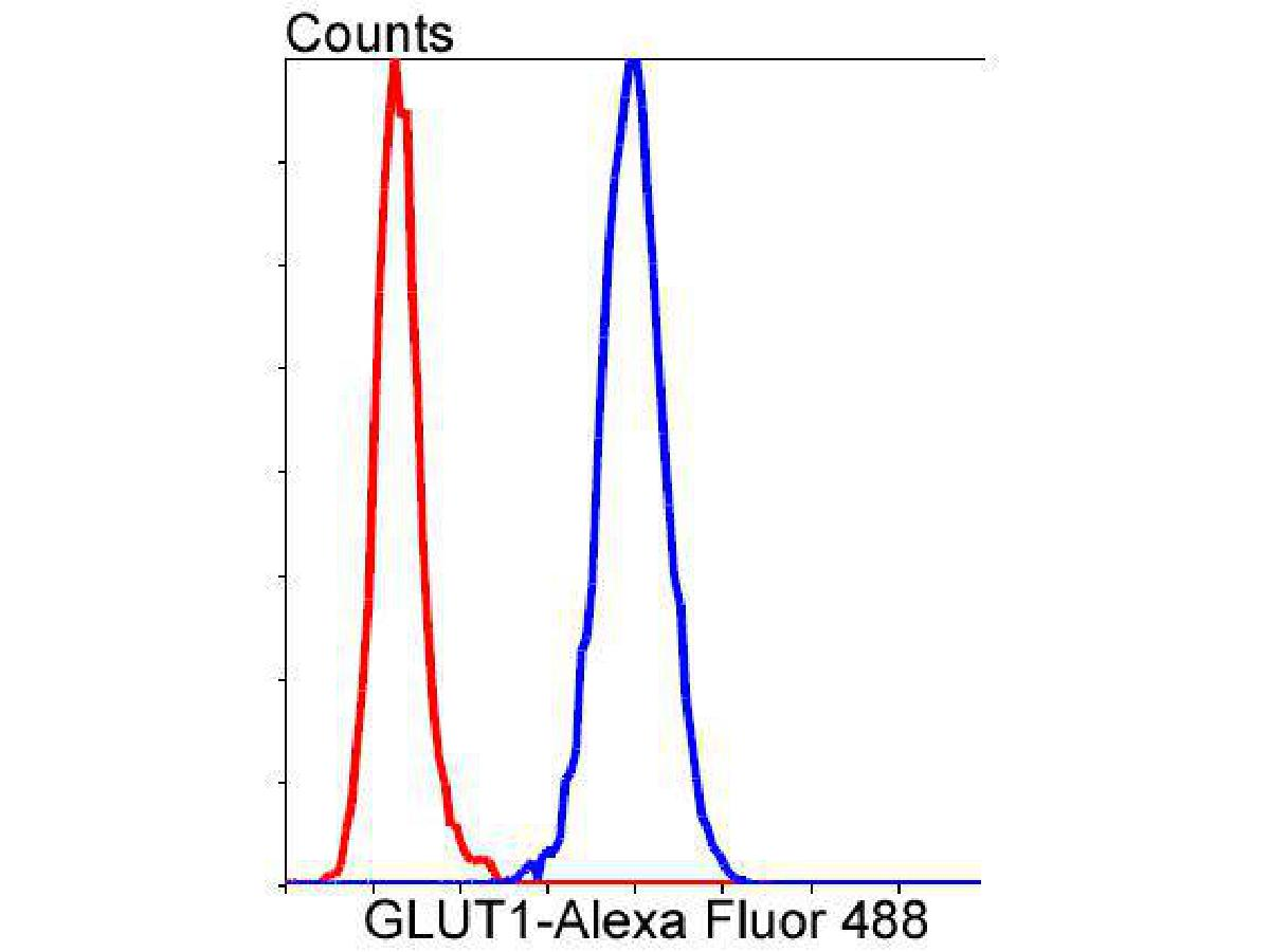 Flow cytometric analysis of Glucose Transporter GLUT1 was done on Hela cells. The cells were fixed, permeabilized and stained with the primary antibody (ET1601-10, 1/50) (blue). After incubation of the primary antibody at room temperature for an hour, the cells were stained with a Alexa Fluor 488-conjugated Goat anti-Rabbit IgG Secondary antibody at 1/1000 dilution for 30 minutes.Unlabelled sample was used as a control (cells without incubation with primary antibody; red).