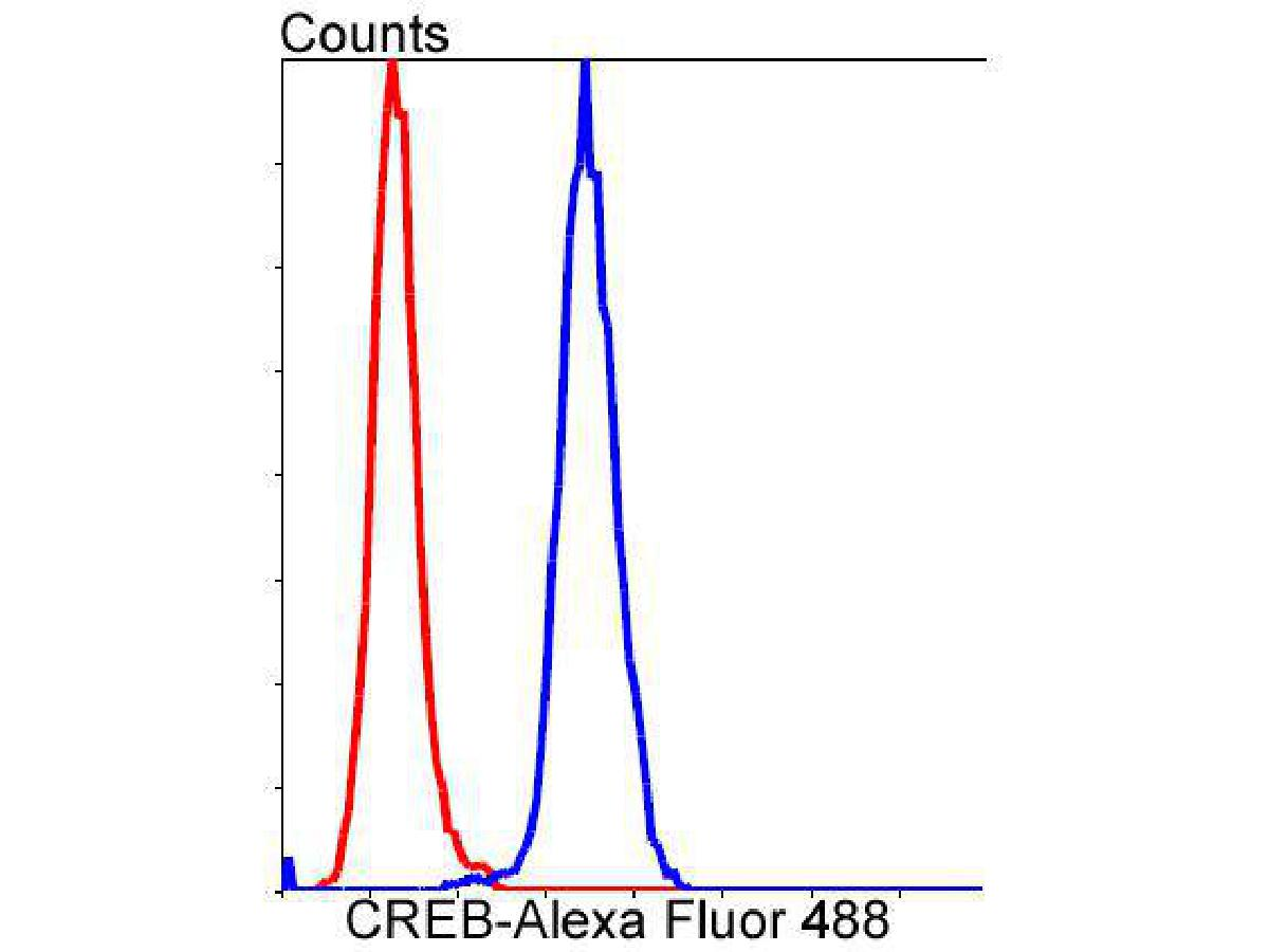 Flow cytometric analysis of CREB was done on Hela cells. The cells were fixed, permeabilized and stained with the primary antibody (ET1601-15, 1/50) (blue). After incubation of the primary antibody at room temperature for an hour, the cells were stained with a Alexa Fluor 488-conjugated Goat anti-Rabbit IgG Secondary antibody at 1/1000 dilution for 30 minutes.Unlabelled sample was used as a control (cells without incubation with primary antibody; red).