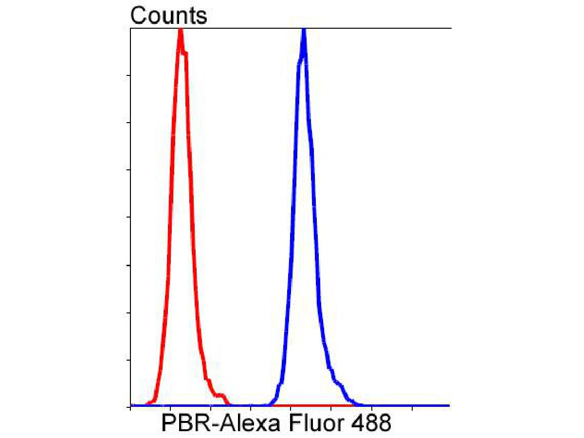 Flow cytometric analysis of PBR was done on Hela cells. The cells were fixed, permeabilized and stained with the primary antibody (ET1601-19, 1/50) (blue). After incubation of the primary antibody at room temperature for an hour, the cells were stained with a Alexa Fluor 488-conjugated Goat anti-Rabbit IgG Secondary antibody at 1/1000 dilution for 30 minutes.Unlabelled sample was used as a control (cells without incubation with primary antibody; red).