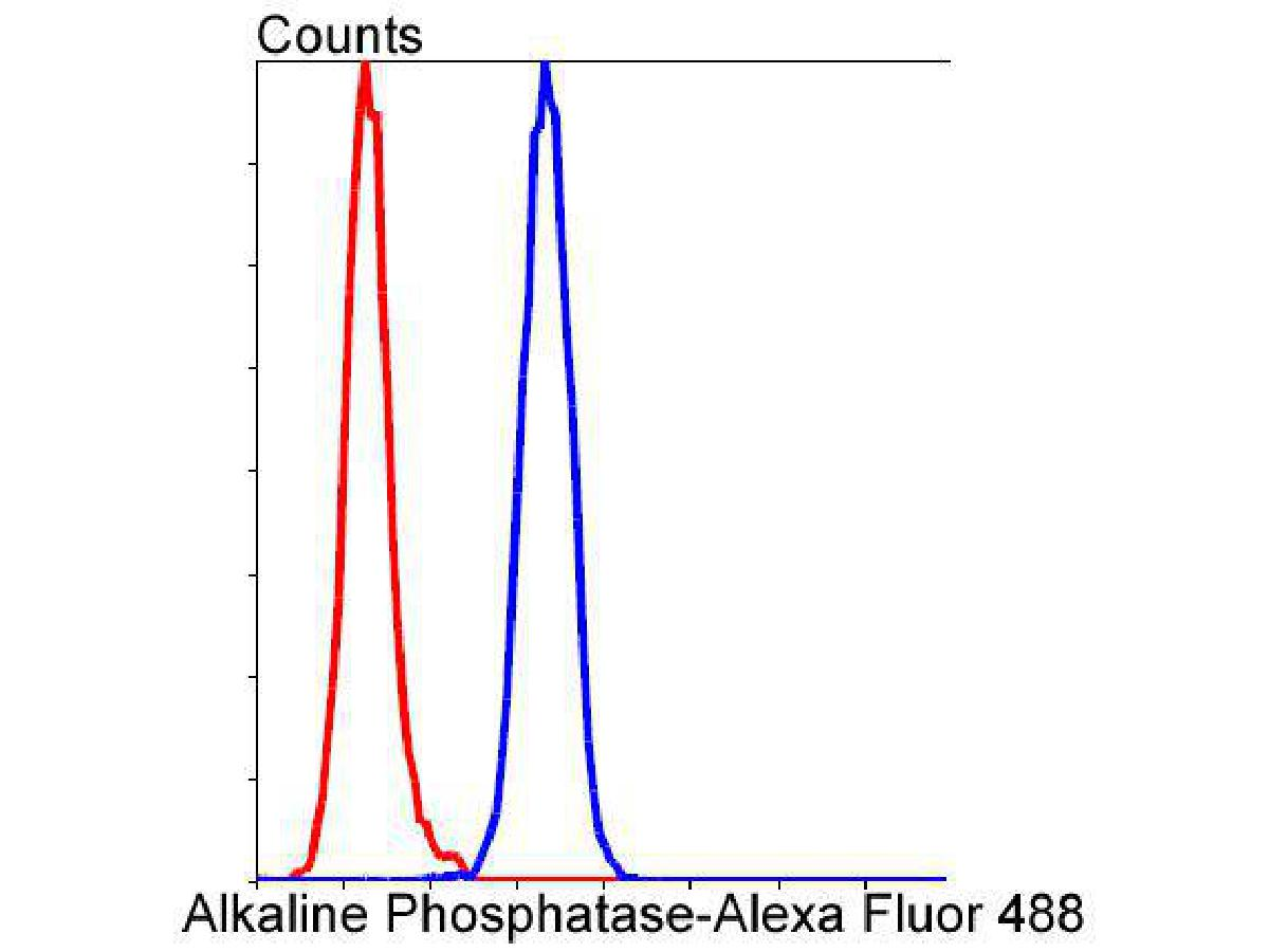 Flow cytometric analysis of Alkaline Phosphatase was done on Hela cells. The cells were fixed, permeabilized and stained with the primary antibody (ET1601-21, 1/50) (blue). After incubation of the primary antibody at room temperature for an hour, the cells were stained with a Alexa Fluor 488-conjugated Goat anti-Rabbit IgG Secondary antibody at 1/1000 dilution for 30 minutes.Unlabelled sample was used as a control (cells without incubation with primary antibody; red).