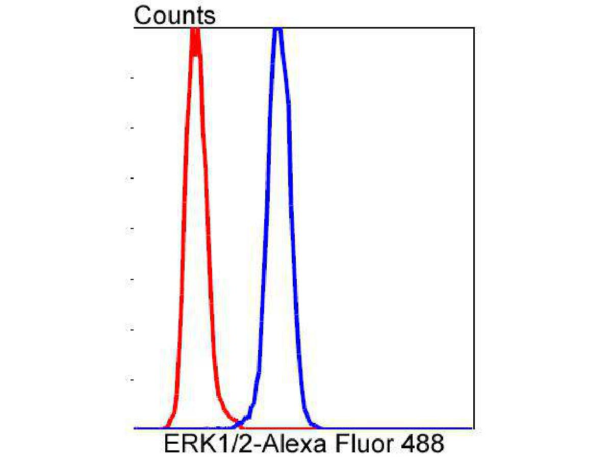 Flow cytometric analysis of ERK1/2 was done on Hela cells. The cells were fixed, permeabilized and stained with the primary antibody (ET1601-29, 1/50) (blue). After incubation of the primary antibody at room temperature for an hour, the cells were stained with a Alexa Fluor 488-conjugated Goat anti-Rabbit IgG Secondary antibody at 1/1000 dilution for 30 minutes.Unlabelled sample was used as a control (cells without incubation with primary antibody; red).