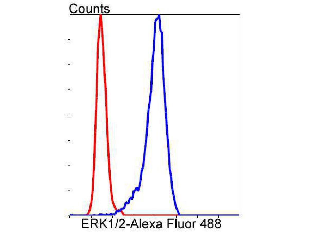 Flow cytometric analysis of ERK1/2 was done on SH-SY5Y cells. The cells were fixed, permeabilized and stained with the primary antibody (ET1601-29, 1/50) (blue). After incubation of the primary antibody at room temperature for an hour, the cells were stained with a Alexa Fluor 488-conjugated Goat anti-Rabbit IgG Secondary antibody at 1/1000 dilution for 30 minutes.Unlabelled sample was used as a control (cells without incubation with primary antibody; red).