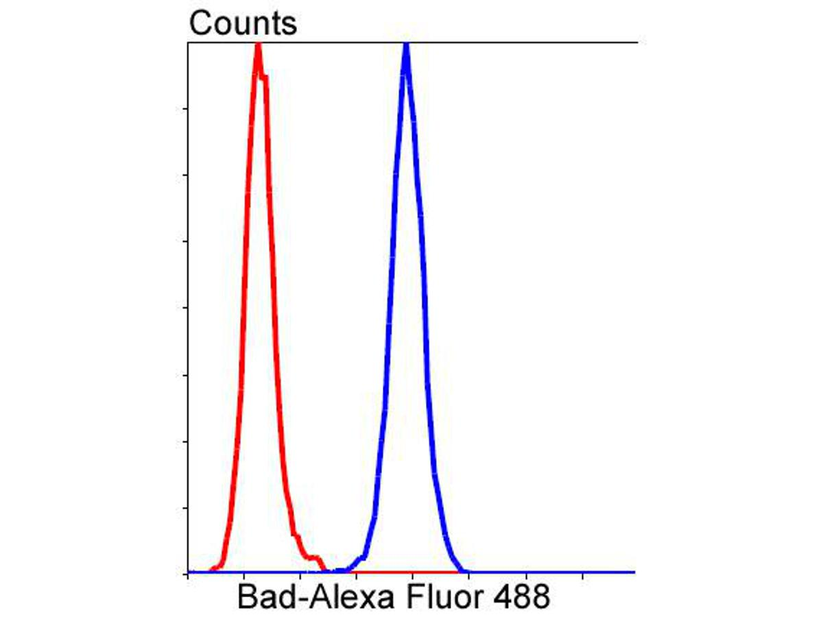 Flow cytometric analysis of Bad was done on Hela cells. The cells were fixed, permeabilized and stained with the primary antibody (ET1601-7, 1/50) (blue). After incubation of the primary antibody at room temperature for an hour, the cells were stained with a Alexa Fluor 488-conjugated Goat anti-Rabbit IgG Secondary antibody at 1/1000 dilution for 30 minutes.Unlabelled sample was used as a control (cells without incubation with primary antibody; red).