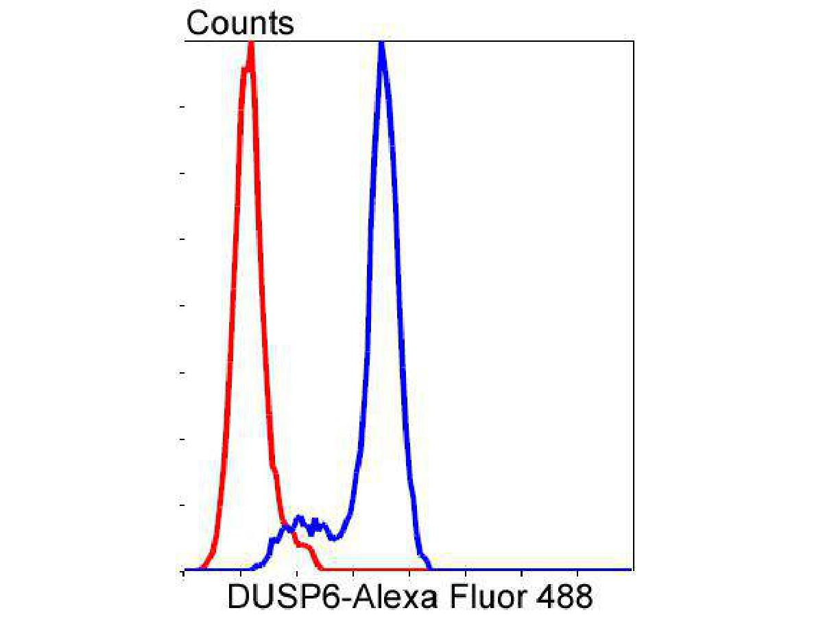 Flow cytometric analysis of DUSP6 was done on NIH/3T3 cells. The cells were fixed, permeabilized and stained with the primary antibody (ET1602-18, 1/50) (blue). After incubation of the primary antibody at room temperature for an hour, the cells were stained with a Alexa Fluor 488-conjugated Goat anti-Rabbit IgG Secondary antibody at 1/1000 dilution for 30 minutes.Unlabelled sample was used as a control (cells without incubation with primary antibody; red).