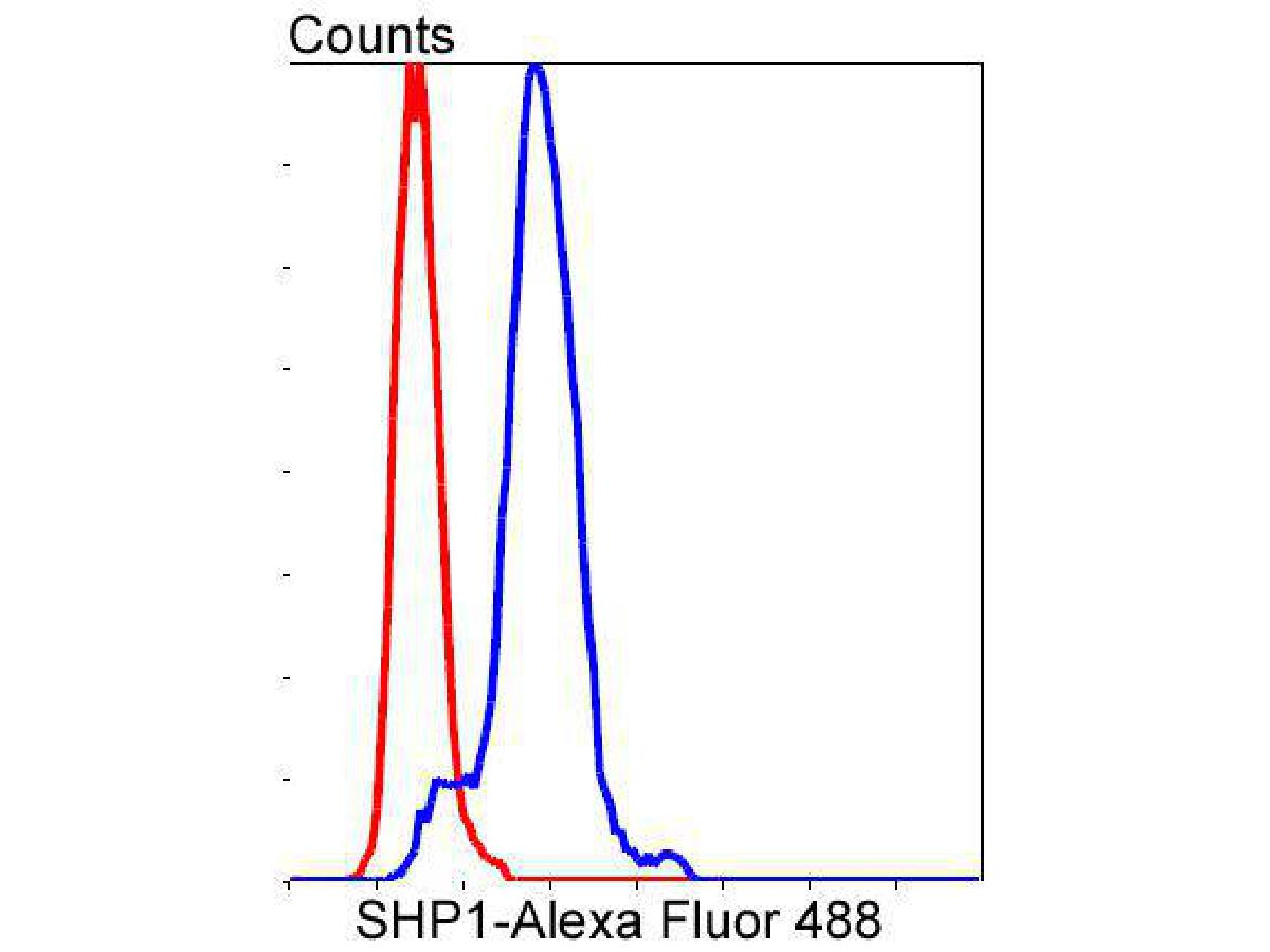 Flow cytometric analysis of SHP1 was done on Hela cells. The cells were fixed, permeabilized and stained with the primary antibody (ET1602-19, 1/50) (blue). After incubation of the primary antibody at room temperature for an hour, the cells were stained with a Alexa Fluor 488-conjugated Goat anti-Rabbit IgG Secondary antibody at 1/1000 dilution for 30 minutes.Unlabelled sample was used as a control (cells without incubation with primary antibody; red).