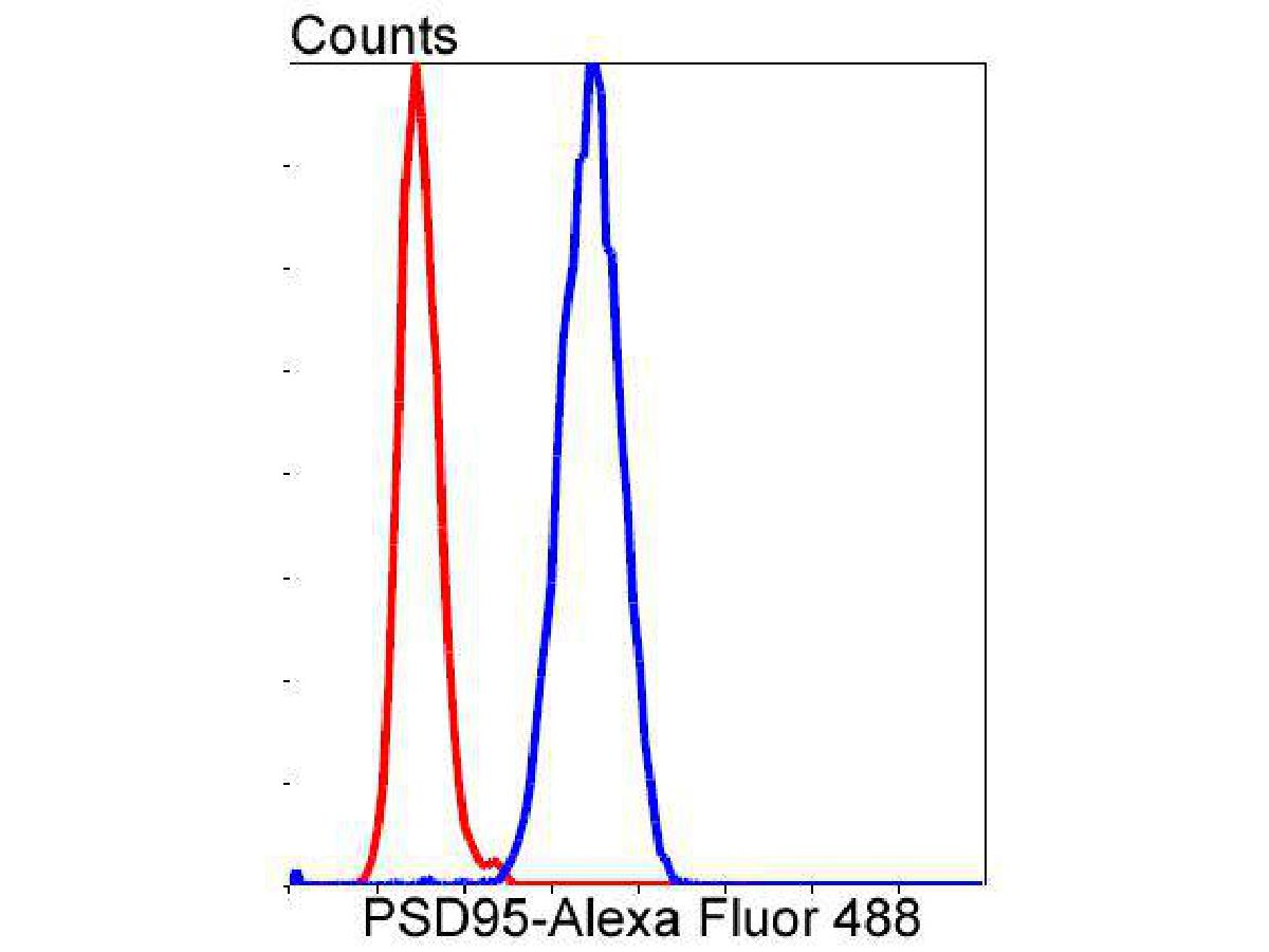 Flow cytometric analysis of PSD95 was done on SH-SY5Y cells. The cells were fixed, permeabilized and stained with the primary antibody (ET1602-20, 1/50) (blue). After incubation of the primary antibody at room temperature for an hour, the cells were stained with a Alexa Fluor 488-conjugated Goat anti-Rabbit IgG Secondary antibody at 1/1000 dilution for 30 minutes.Unlabelled sample was used as a control (cells without incubation with primary antibody; red).
