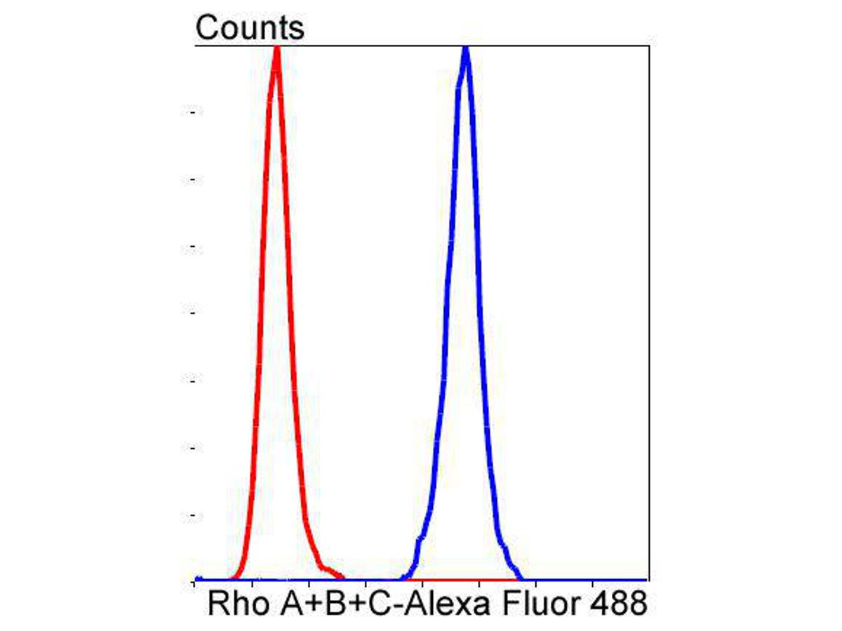 Flow cytometric analysis of HepG2 cells with Rho A+B+C antibody at 1/50 dilution (blue) compared with an unlabelled control (cells without incubation with primary antibody; red). Alexa Fluor 488-conjugated goat anti rabbit IgG was used as the secondary antibody.