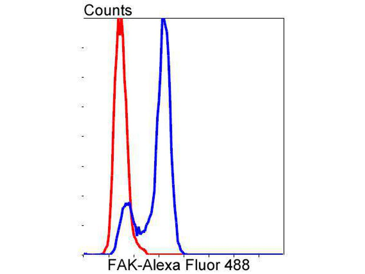 Flow cytometric analysis of FAK was done on Hela cells. The cells were fixed, permeabilized and stained with the primary antibody (ET1602-25, 1/50) (blue). After incubation of the primary antibody at room temperature for an hour, the cells were stained with a Alexa Fluor 488-conjugated Goat anti-Rabbit IgG Secondary antibody at 1/1000 dilution for 30 minutes.Unlabelled sample was used as a control (cells without incubation with primary antibody; red).
