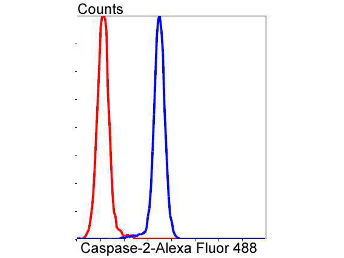 Flow cytometric analysis of Caspase-2 was done on Jurkat cells. The cells were fixed, permeabilized and stained with the primary antibody (ET1602-30, 1/50) (blue). After incubation of the primary antibody at room temperature for an hour, the cells were stained with a Alexa Fluor 488-conjugated Goat anti-Rabbit IgG Secondary antibody at 1/1000 dilution for 30 minutes.Unlabelled sample was used as a control (cells without incubation with primary antibody; red).