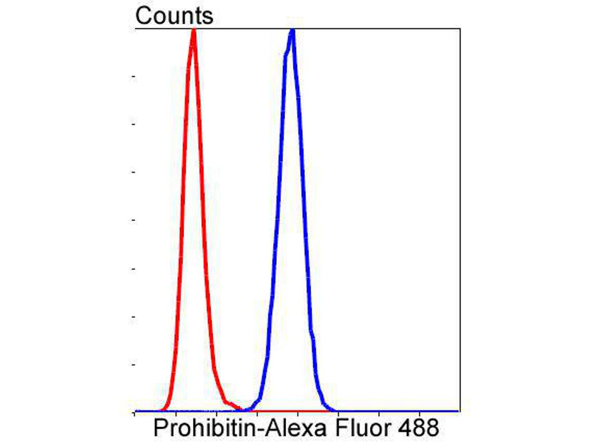 Flow cytometric analysis of Prohibitin was done on HepG2 cells. The cells were fixed, permeabilized and stained with the primary antibody (ET1602-31, 1/50) (blue). After incubation of the primary antibody at room temperature for an hour, the cells were stained with a Alexa Fluor 488-conjugated Goat anti-Rabbit IgG Secondary antibody at 1/1000 dilution for 30 minutes.Unlabelled sample was used as a control (cells without incubation with primary antibody; red).