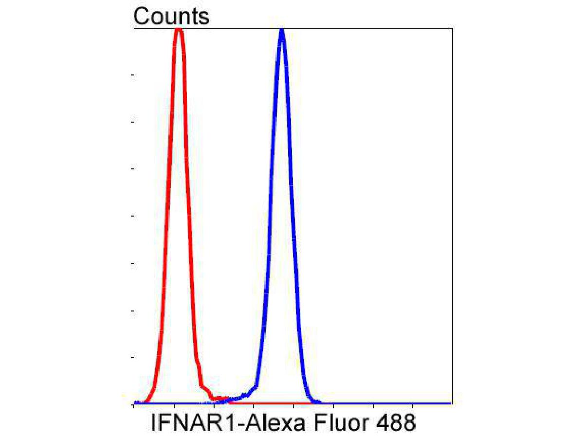 Flow cytometric analysis of IFNAR1 was done on Jurkat cells. The cells were fixed, permeabilized and stained with the primary antibody (ET1602-37, 1/50) (blue). After incubation of the primary antibody at room temperature for an hour, the cells were stained with a Alexa Fluor 488-conjugated Goat anti-Rabbit IgG Secondary antibody at 1/1000 dilution for 30 minutes.Unlabelled sample was used as a control (cells without incubation with primary antibody; red).
