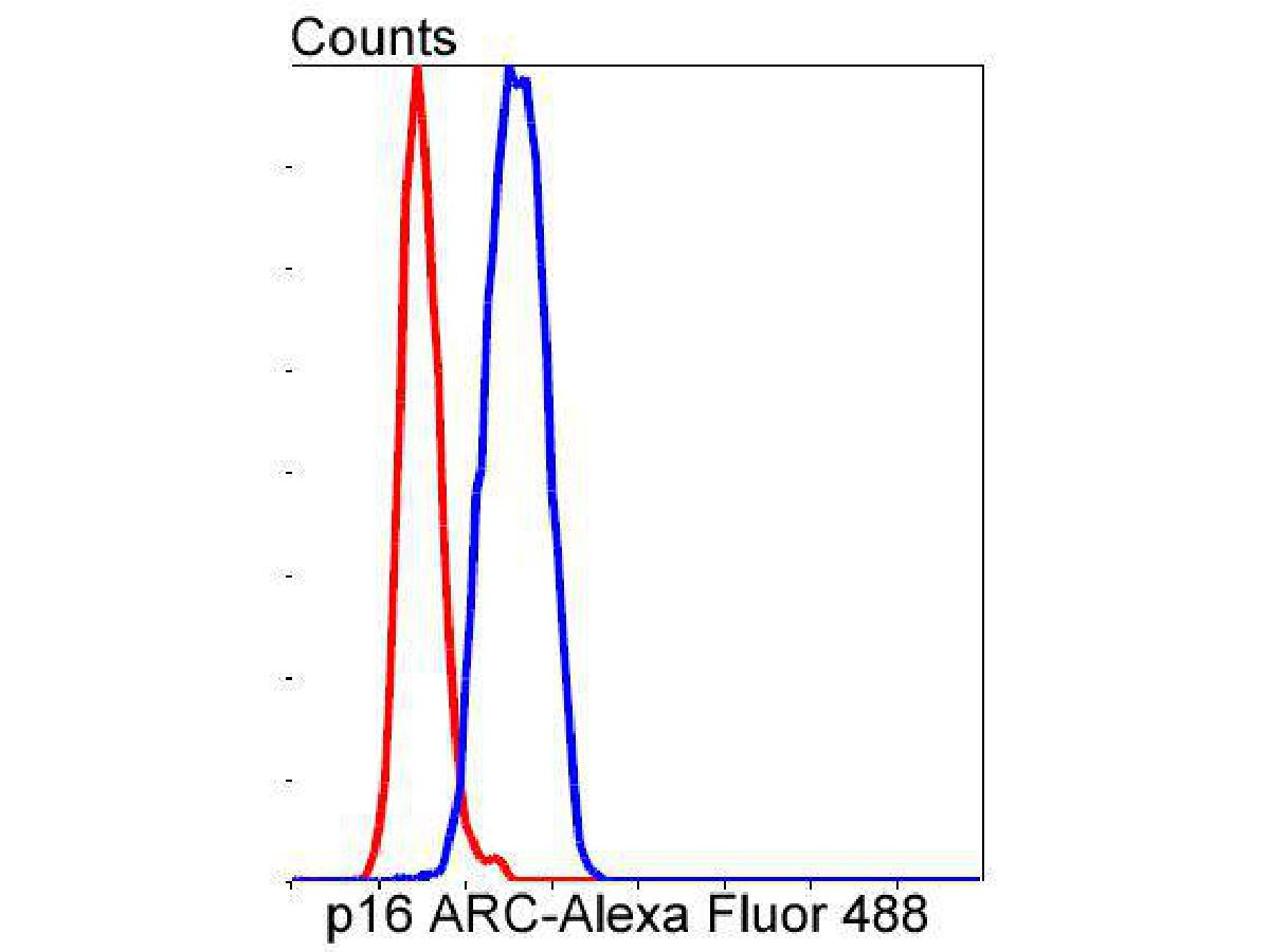 Flow cytometric analysis of SH-SY-5Y cells with p16 ARC antibody at 1/50 dilution (blue) compared with an unlabelled control (cells without incubation with primary antibody; red). Alexa Fluor 488-conjugated goat anti rabbit IgG was used as secondary antibody.