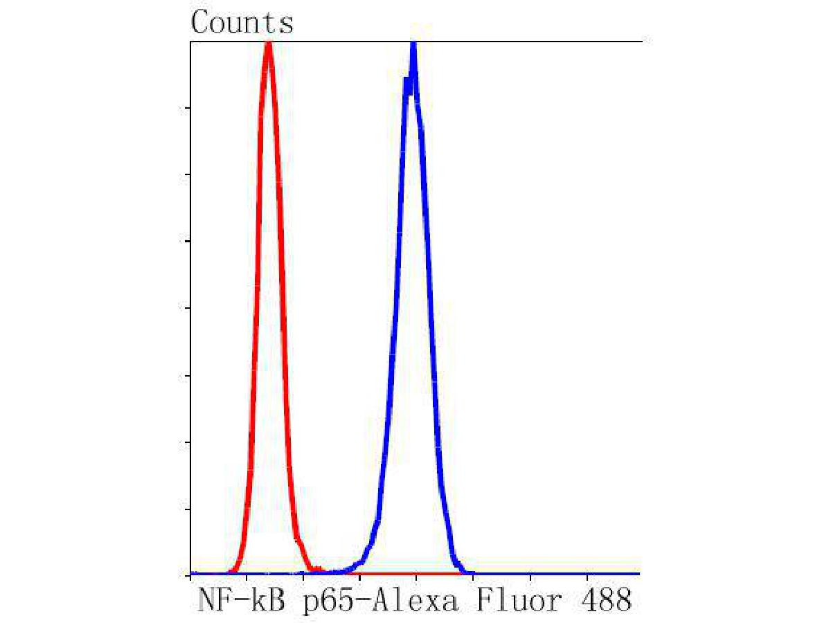 Flow cytometric analysis of NF-κB p65 was done on Hela cells. The cells were fixed, permeabilized and stained with the primary antibody (ET1603-12, 1/50) (blue). After incubation of the primary antibody at room temperature for an hour, the cells were stained with a Alexa Fluor 488-conjugated Goat anti-Rabbit IgG Secondary antibody at 1/1000 dilution for 30 minutes.Unlabelled sample was used as a control (cells without incubation with primary antibody; red).