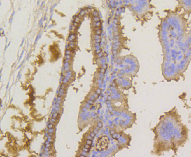 Flow cytometric analysis of Phospho-eIF-2a(S51) was done on Hela cells. The cells were fixed, permeabilized and stained with the primary antibody (ET1603-14, 1/50) (blue). After incubation of the primary antibody at room temperature for an hour, the cells were stained with a Alexa Fluor 488-conjugated Goat anti-Rabbit IgG Secondary antibody at 1/1000 dilution for 30 minutes.Unlabelled sample was used as a control (cells without incubation with primary antibody; red).