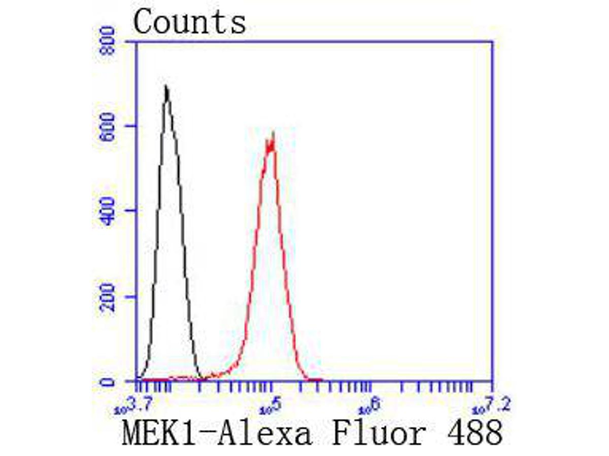 Flow cytometric analysis of MEK1 was done on Hela cells. The cells were fixed, permeabilized and stained with the primary antibody (ET1603-20, 1/50) (red). After incubation of the primary antibody at room temperature for an hour, the cells were stained with a Alexa Fluor 488-conjugated Goat anti-Rabbit IgG Secondary antibody at 1/1000 dilution for 30 minutes.Unlabelled sample was used as a control (cells without incubation with primary antibody; black).